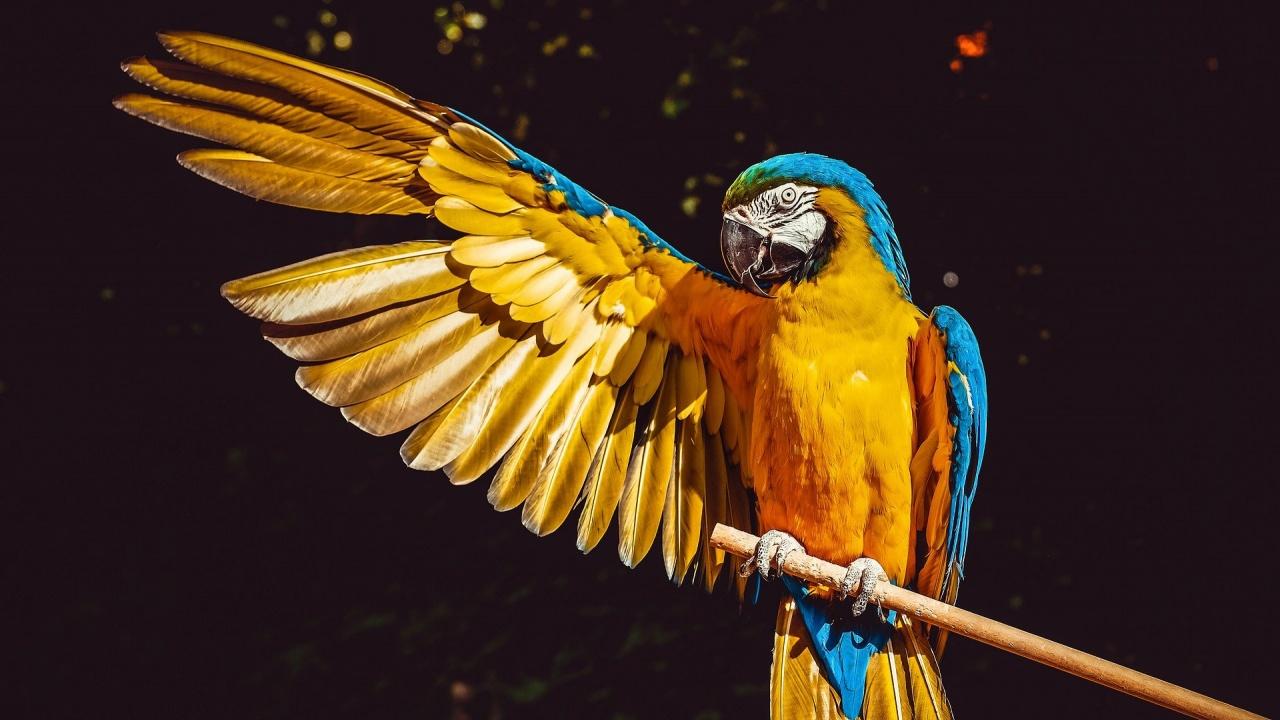 Затварят прочут пазар за птици в Париж