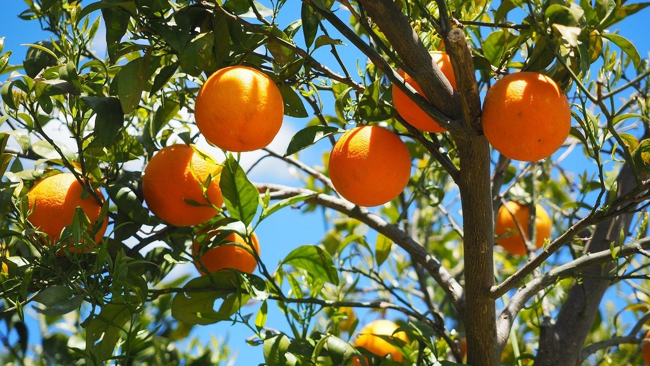 """ДФ """"Земеделие"""" изплаща 90 млн. лв. помощи на производители на плодове и зеленчуци"""