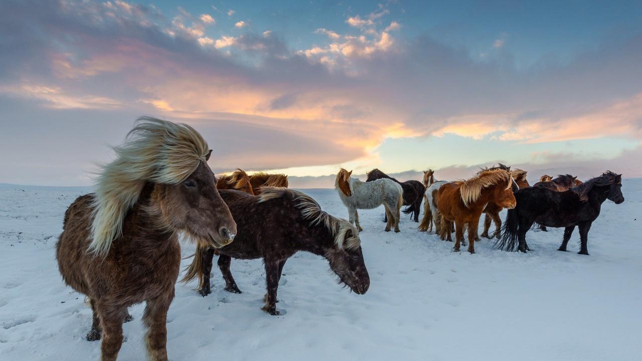 Осъдиха мъжа, чиито коне измръзнаха в Осоговската планина