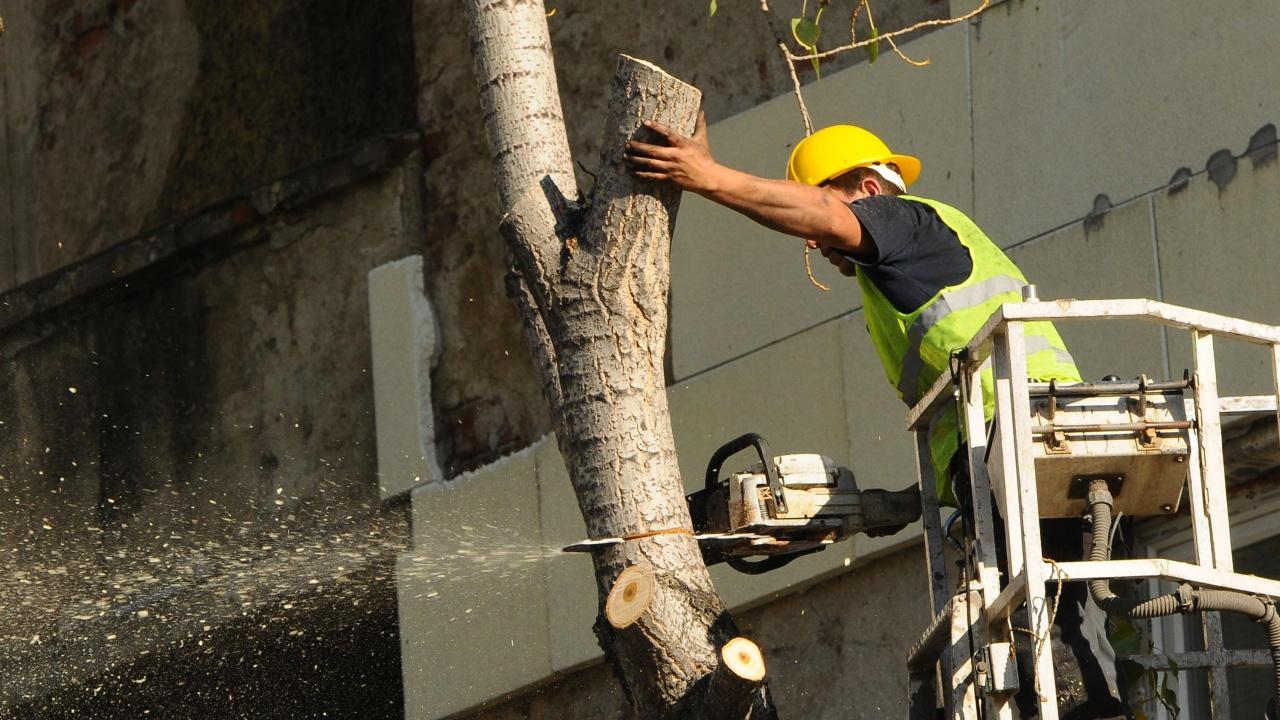 Три сухи дървета в Борисовата градина ще бъдат премахнати