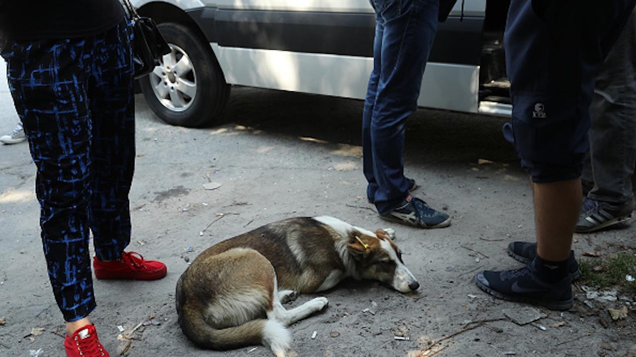 Разследват убийството на куче в Сопот