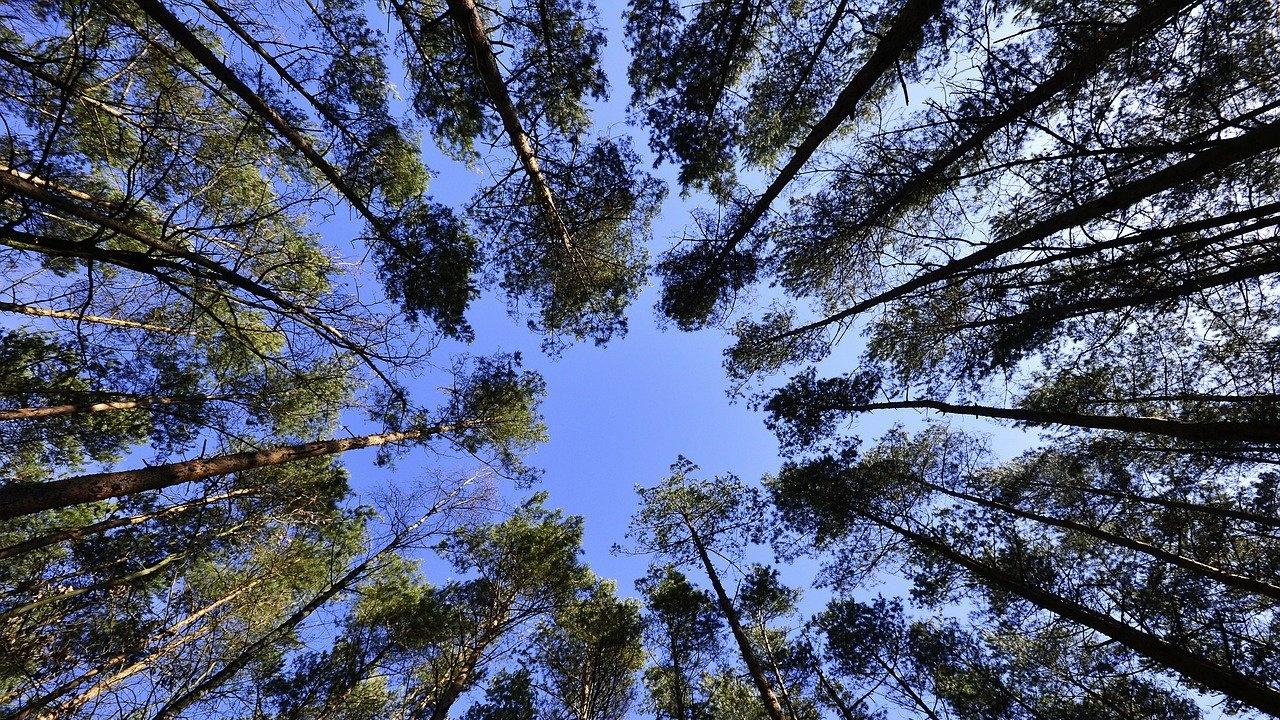 Дърветата в Разград ще бъдат обследвани със специална машина
