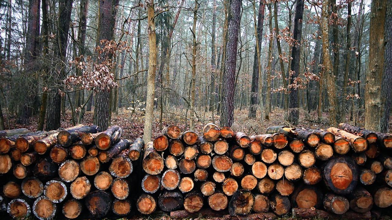 Задържаха ремарке с 25 куб. метра незаконно добита дървесина край Шумен