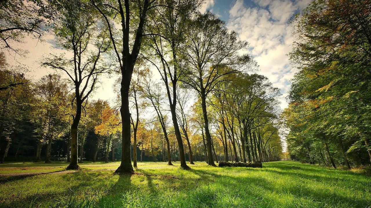 Финансират 8 зелени проекта в Община Хасково
