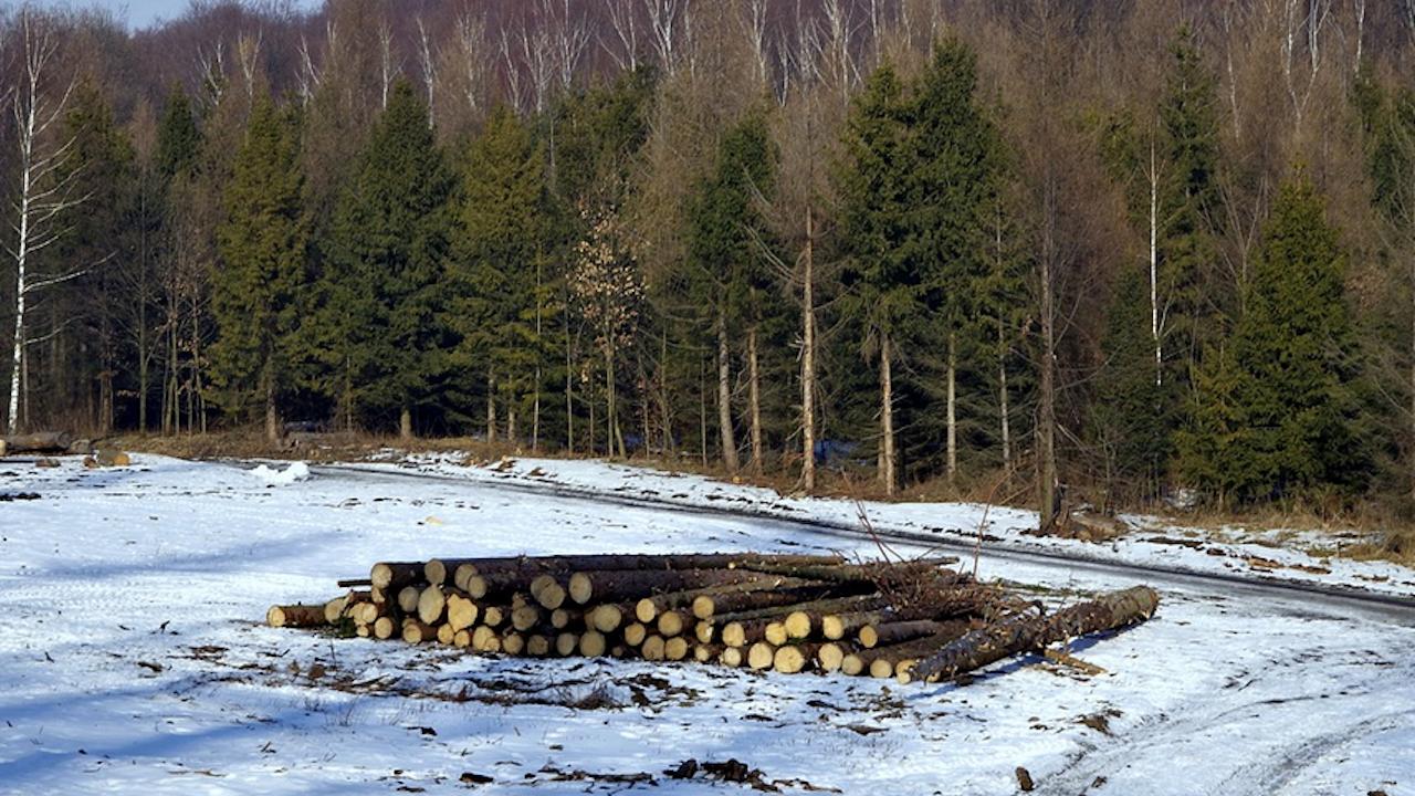 11 акта за нарушения на горското законодателствo съставиха екипите на ИАГ и РДГ