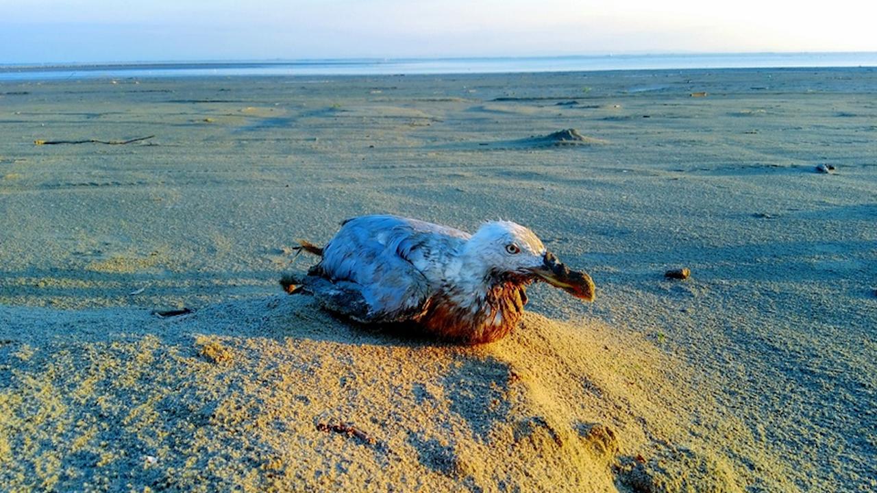 Най-старата дива птица в света измъти пиле