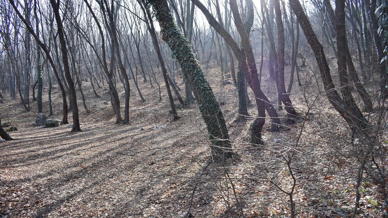 Община Асеновград стартира кампания по раздаване на растителност