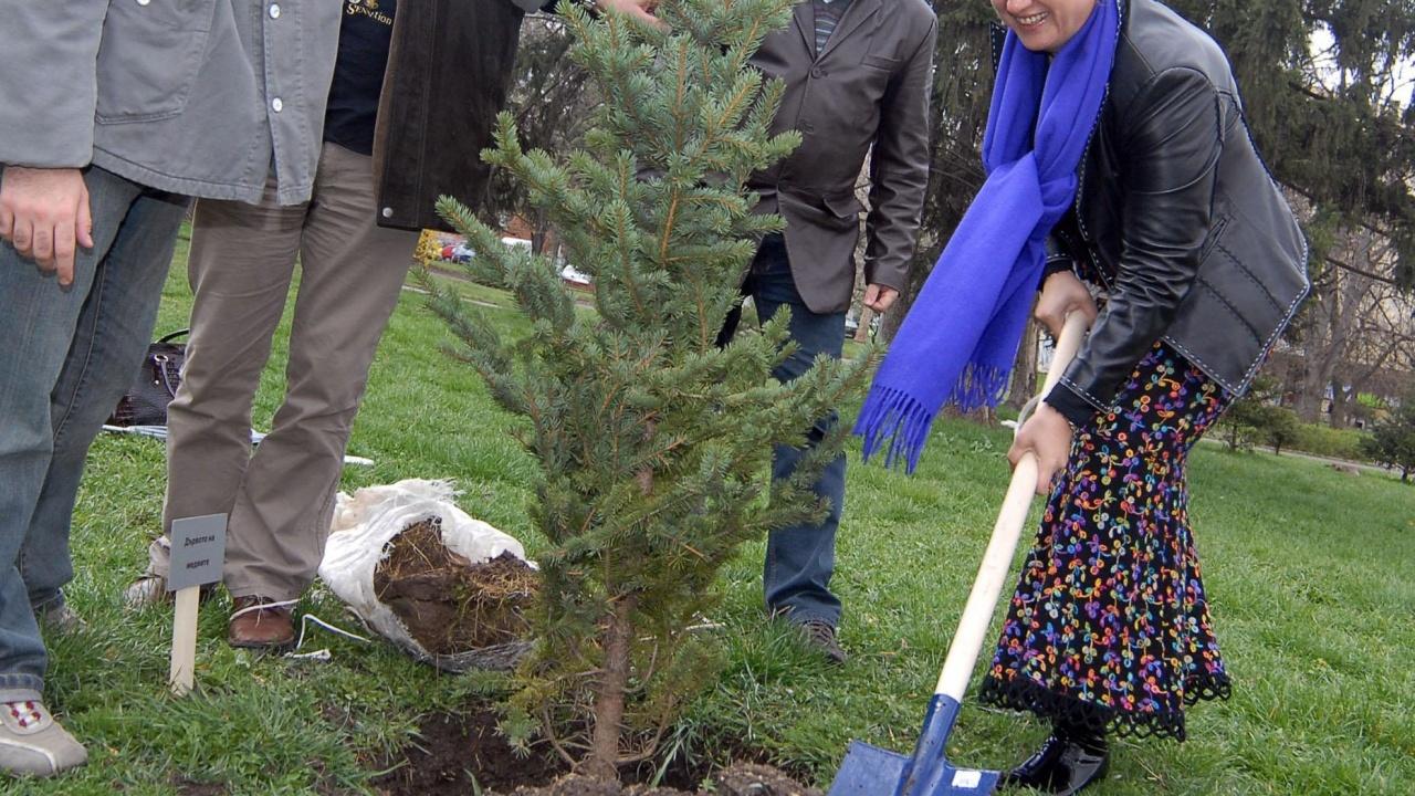 51 дка нова гора ще бъде засадена в Столична община през 2021 г.