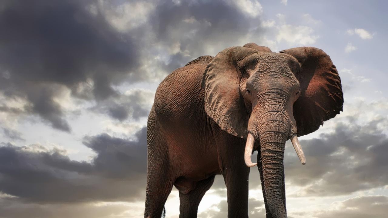Опазването на дивата природа сериозно е пострадало заради пандемията