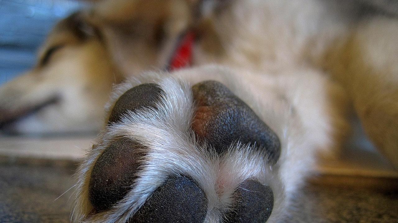 Лапите на кучетата били по-чисти от обувките на хората