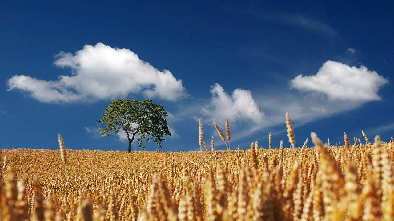 И тази година фермери ще получат компенсации заради COVID кризата