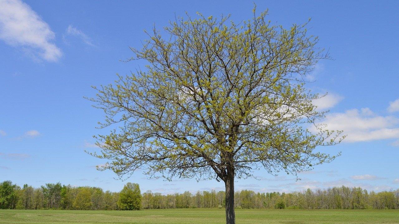 Лекари и медицински специалисти посадиха дръвчета пред музея в Търговище