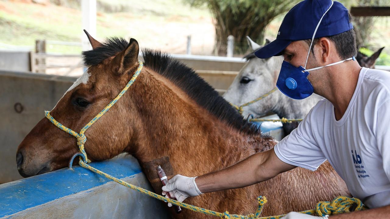 Ветеринарни лекари са заразени с ку-треска в Силистренско