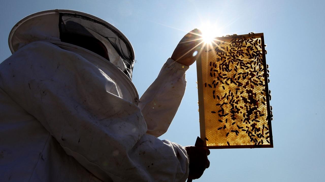 Пчеларите могат да реализират проектите си по НПП чрез кредит с 2,5 на сто лихва