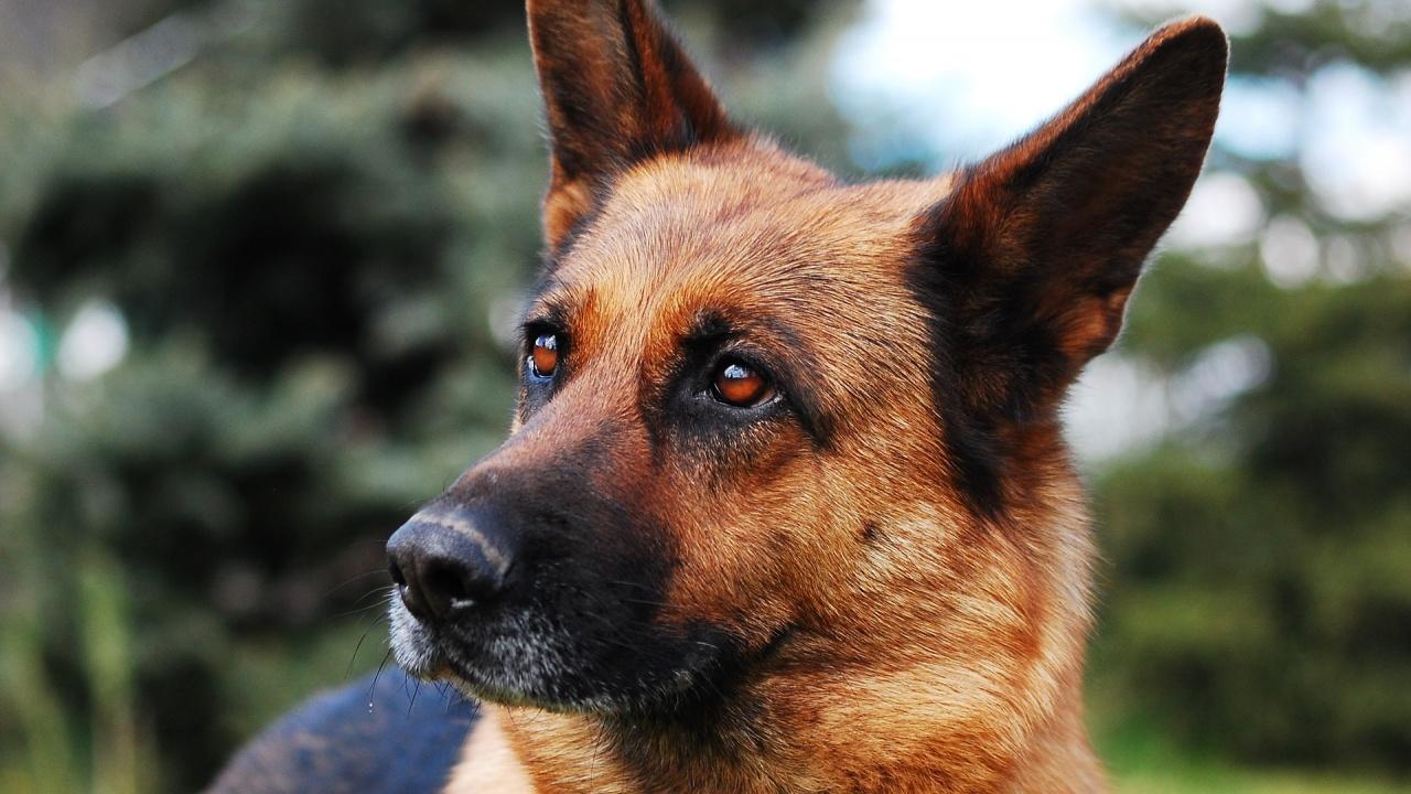 Кучетата на Джо Байдън ще се върнат в Белия дом