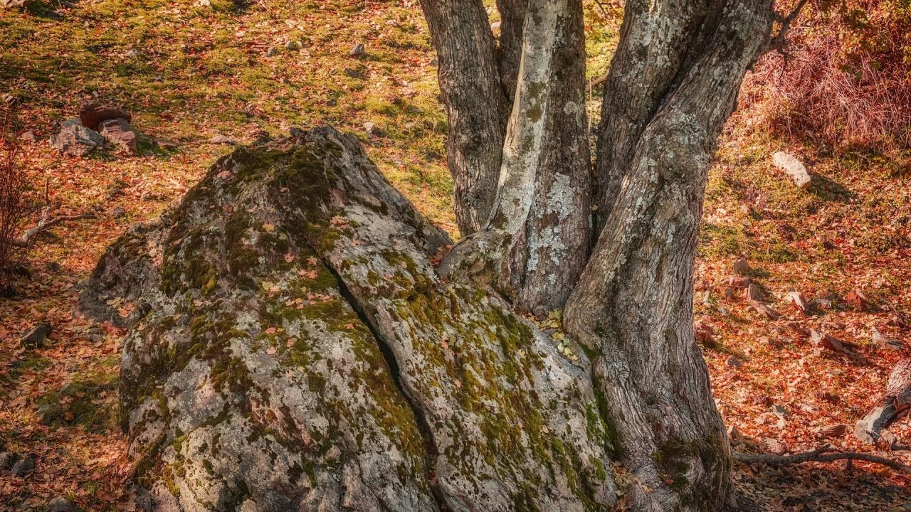 В Китай откриха вкаменелости от дървета на 300 милиона години