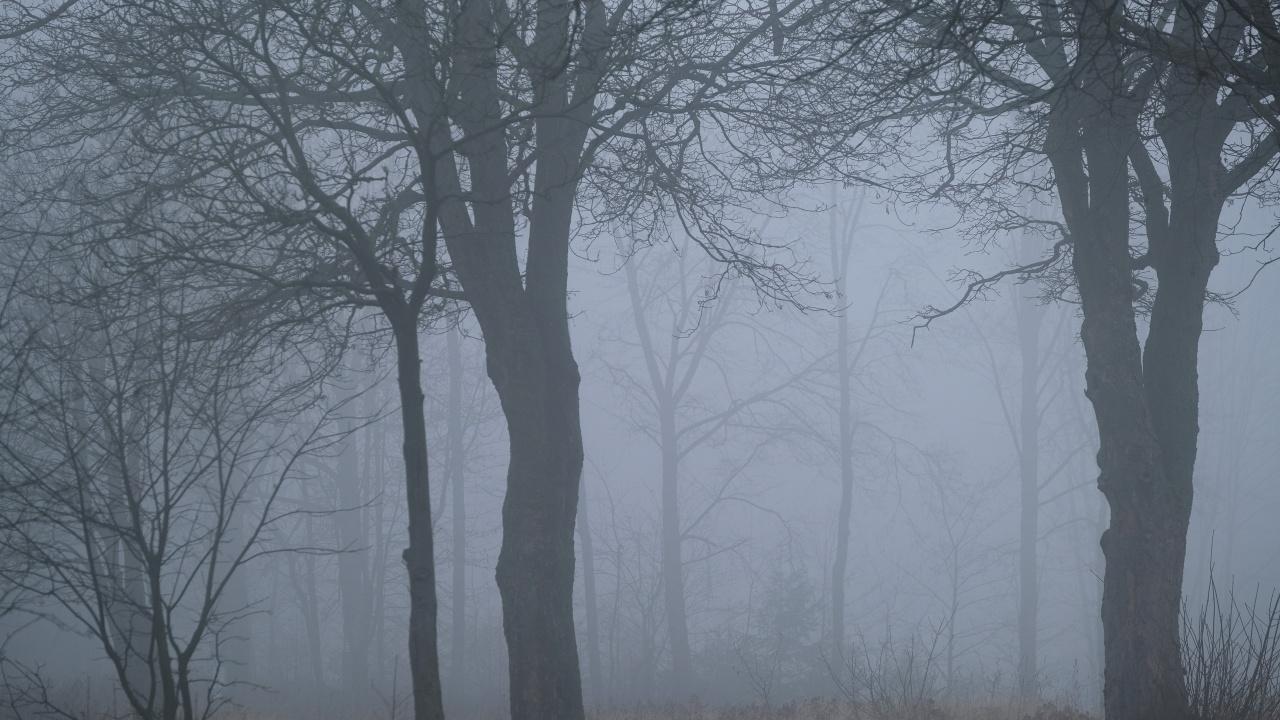 Видимостта в различни райони на страната е намалена заради мъгла