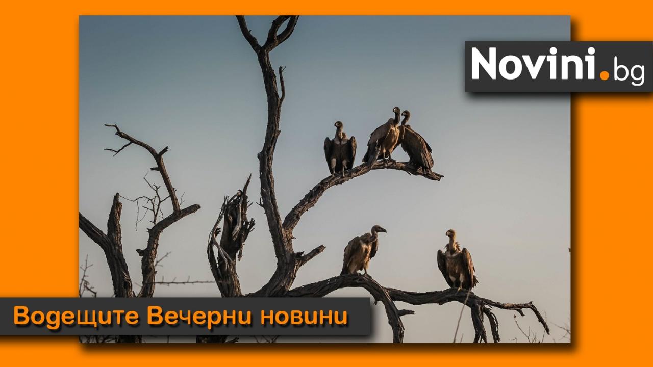 Водещите новини! България е притисната от COVID. Лешояди се разхождат по улиците