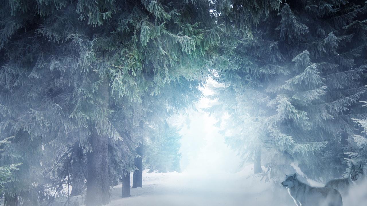 Без резултат приключи акцията по издирване на изчезнали сноубордист