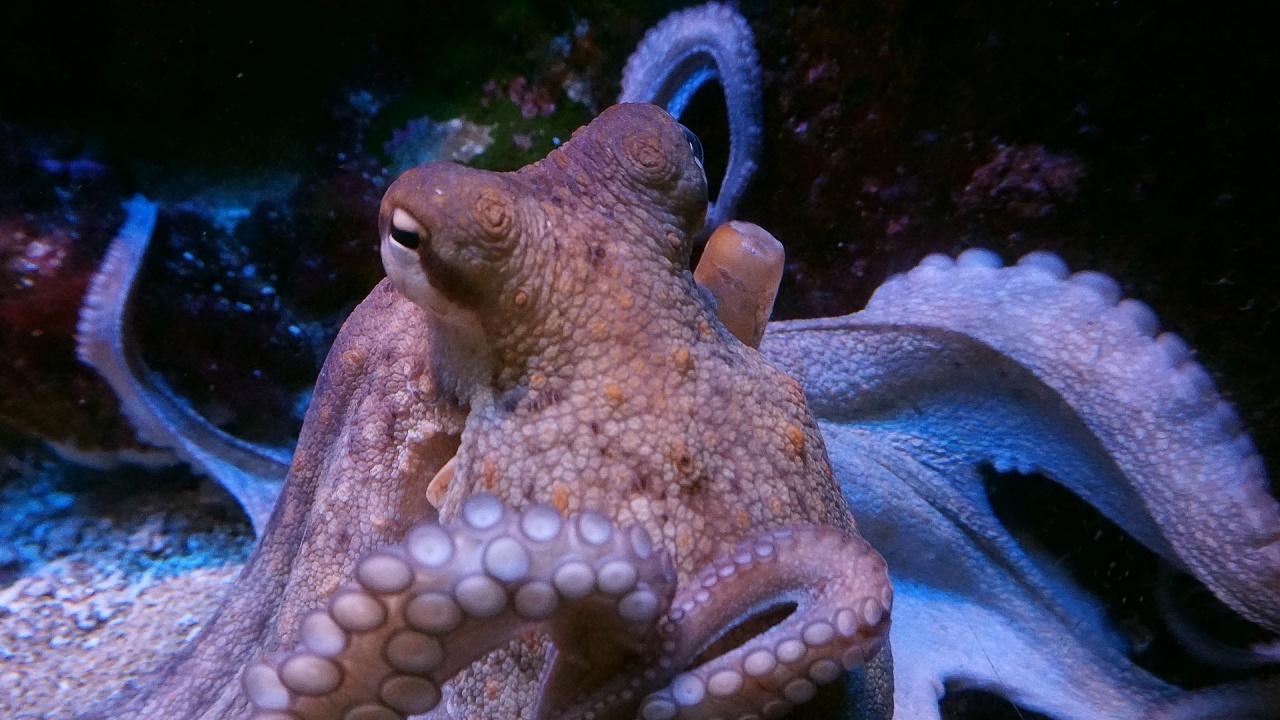 Изследване с октоподи дава информация за еволюцията на съня