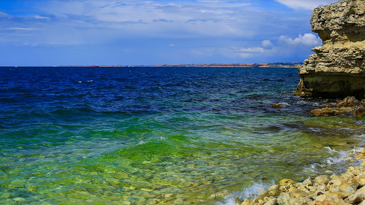 Грийнпийс: Пластмасовите отпадъци в Черно море са причинили смъртта на стотици животни