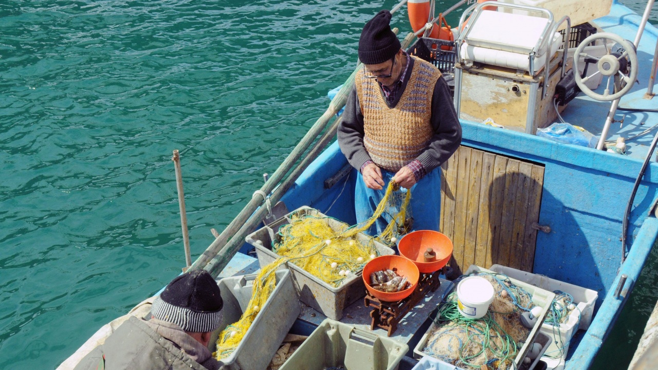 Риболовците започнаха улова на попчета през слънчевия ден