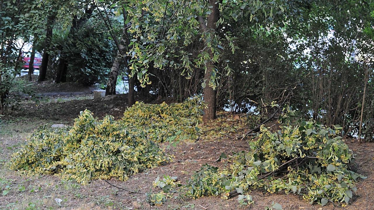 """Разчистват паднали дървета от парка """"Кьошковете"""" към пещера """"Русалка"""""""