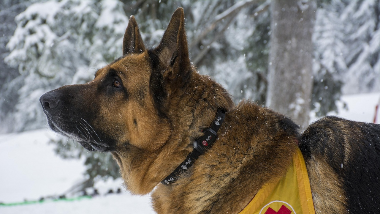 И днес продължава издирването на изчезналия в Рила сноубордист
