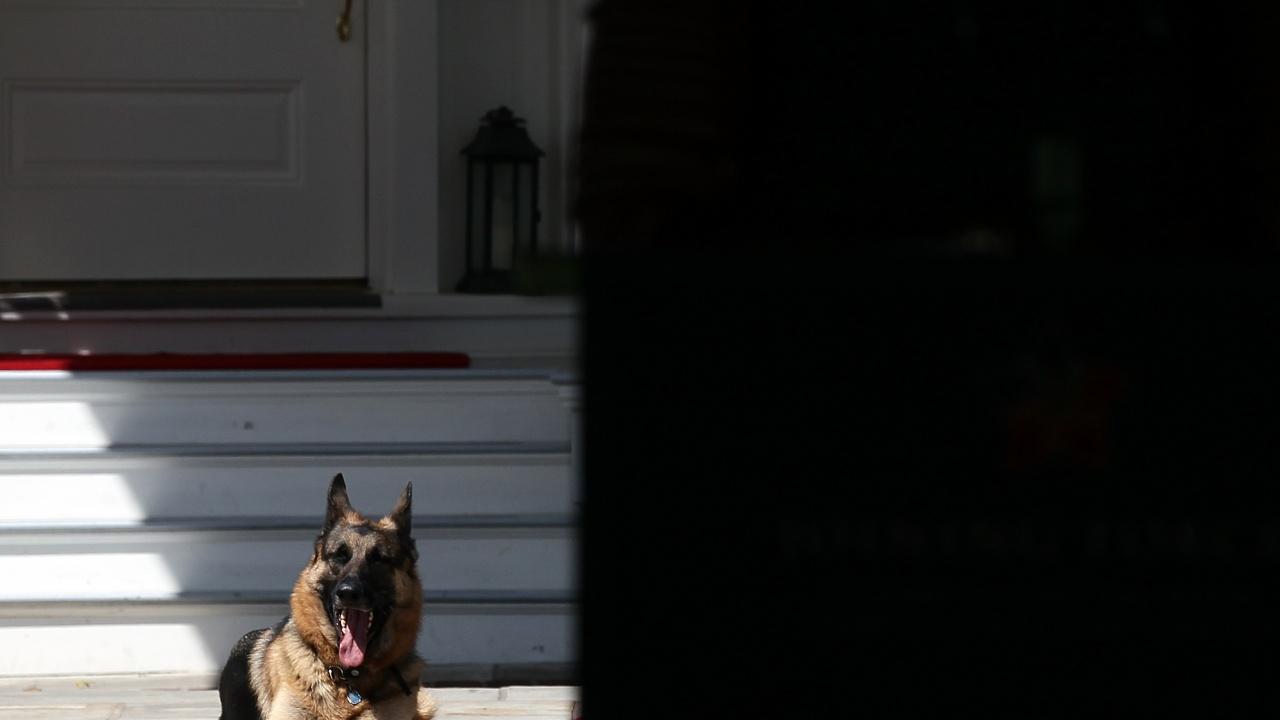 Кучето на Байдън отново ухапа човек в Белия дом