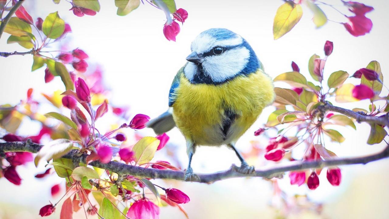 Празнуваме Международния ден на птиците днес