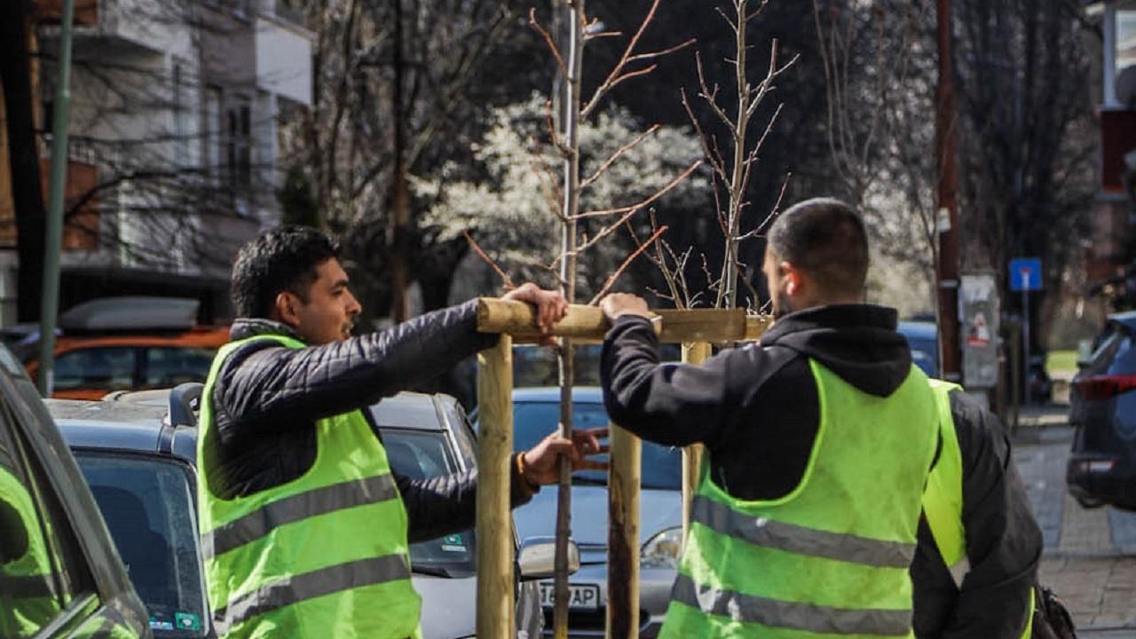 1700 фиданки ще бъдат засадени тази пролет покрай улици и булеварди в София