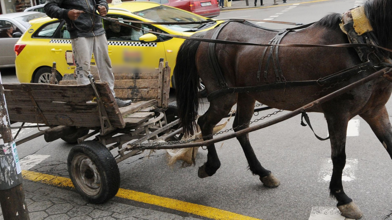 Подплашен кон с каруца предизвика екшън на улица в Ракитово