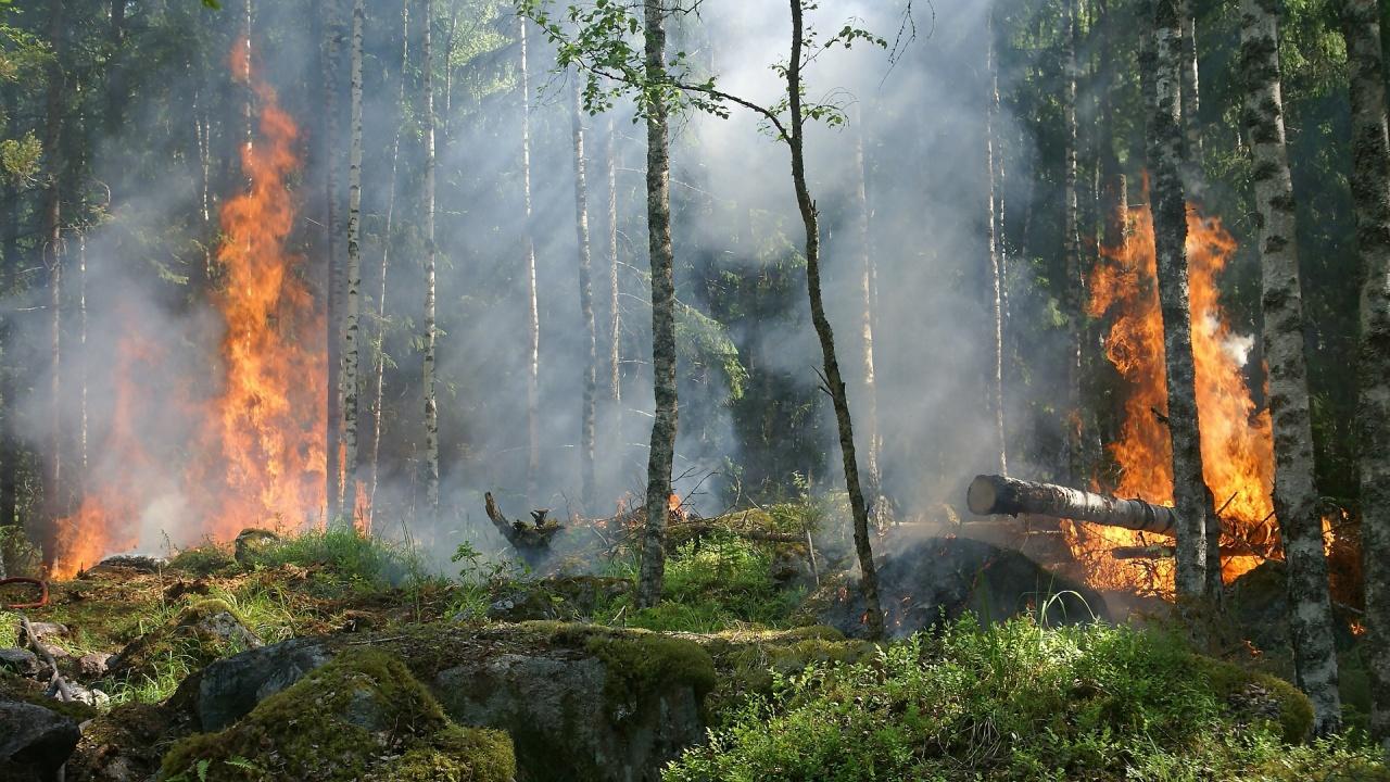 Огромен горски пожар на гръцки остров заплашва да стигне селища