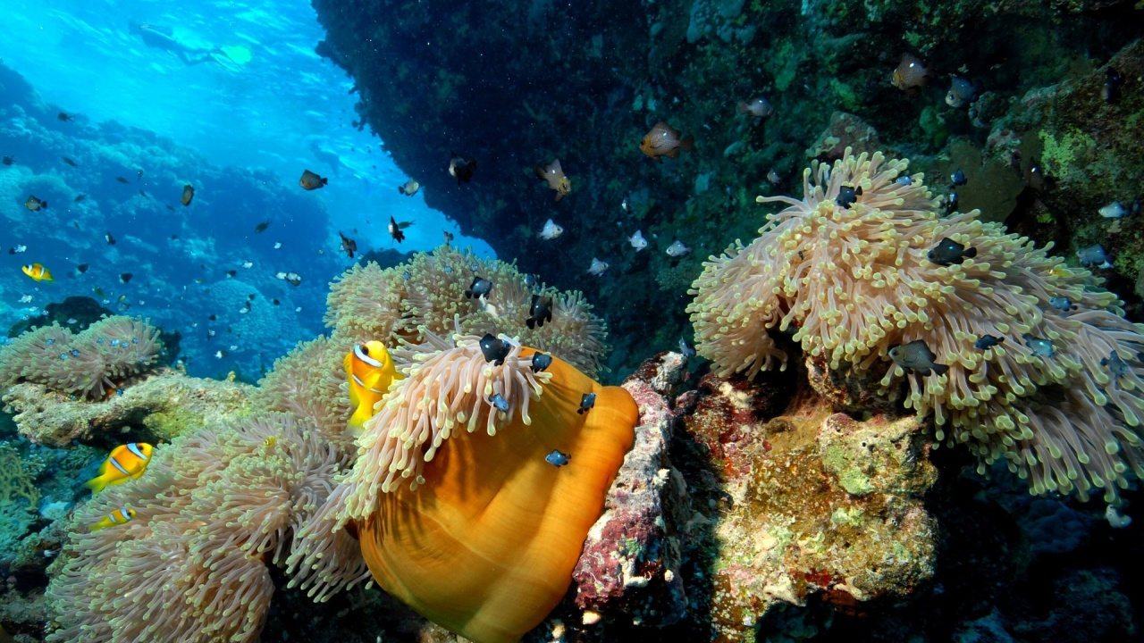 Климатичните промени намаляват богатството на морски живот в близост до екватора