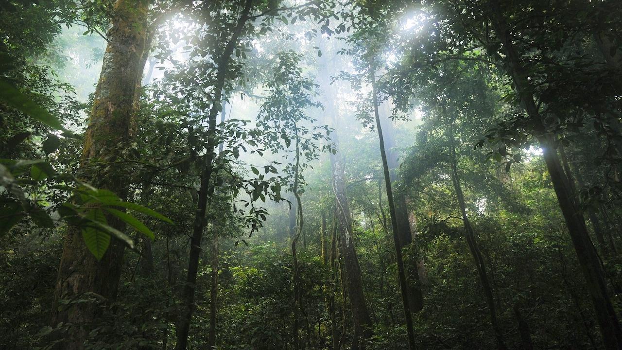 Унищожаването на амазонските гори е нараснало със 17 процента през 2020 г.