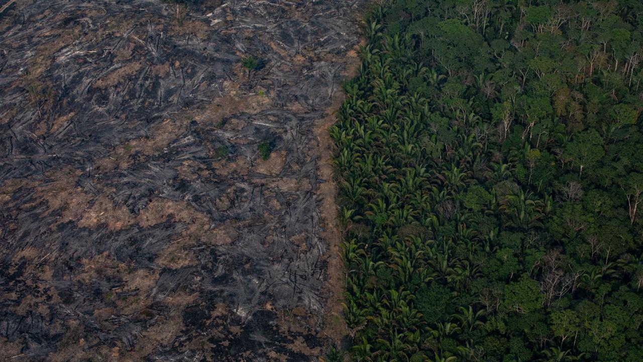Reuters: Бразилия търси един милиард долара чуждестранна помощ, за да се намали обезлесяването на Амазония