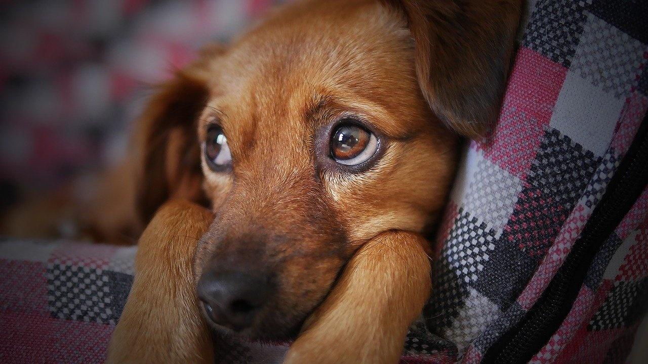 Кучетата ревнуват стопаните си