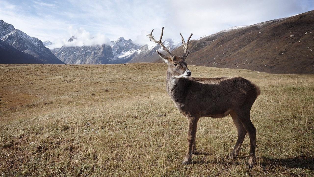 Бракониери разстреляха два елена в Разградско