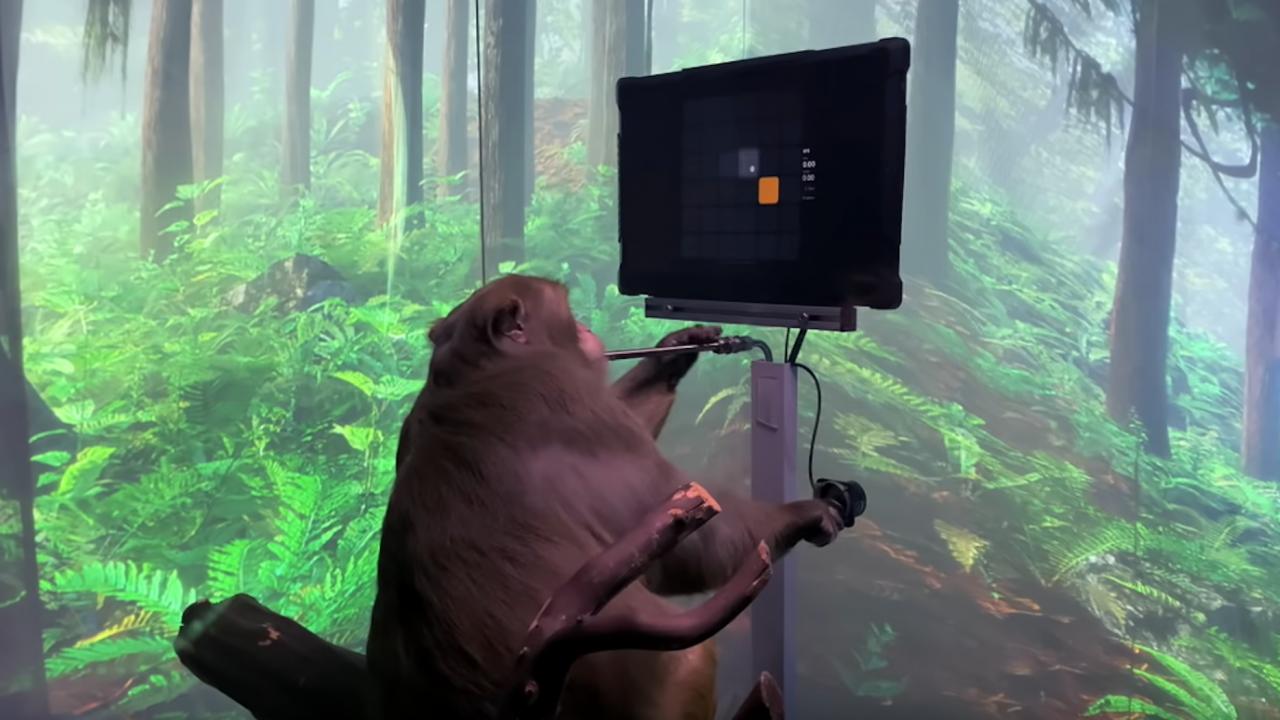 Neuralink показа маймуна с имплантиран в мозъка чип, която играе видеоигри