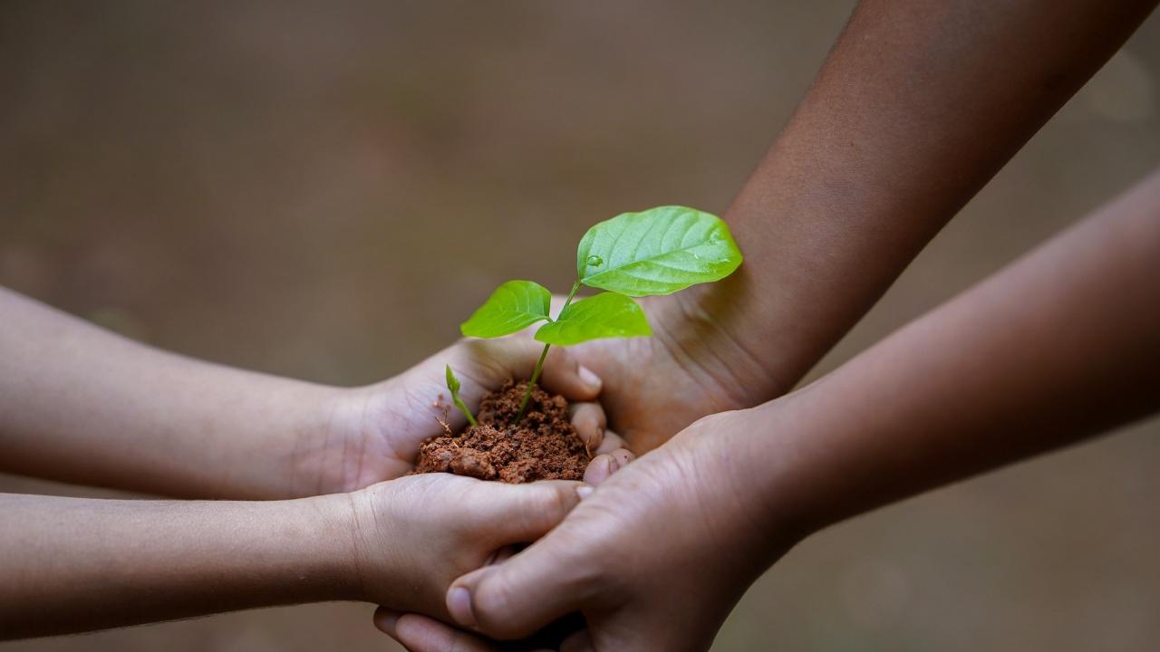 В Русе засадиха 48 фиданки в дворове на девет училища