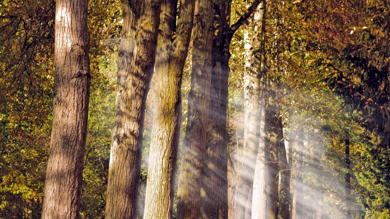 """В район """"Нови Искър"""" ще бъдат засадени 80 000 широколистни дървета"""