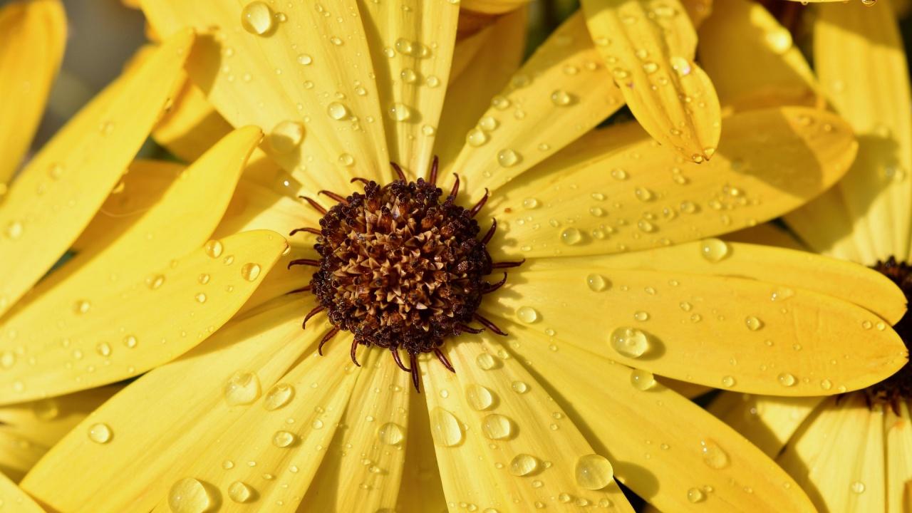 Очаква ни по-хладна пролет с по-чести валежи