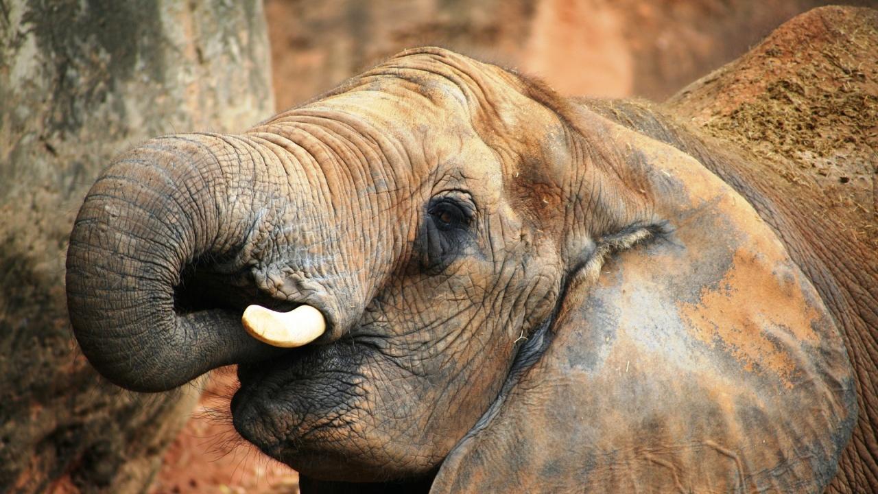 Учени създадоха материал, който може да замени слоновата кост