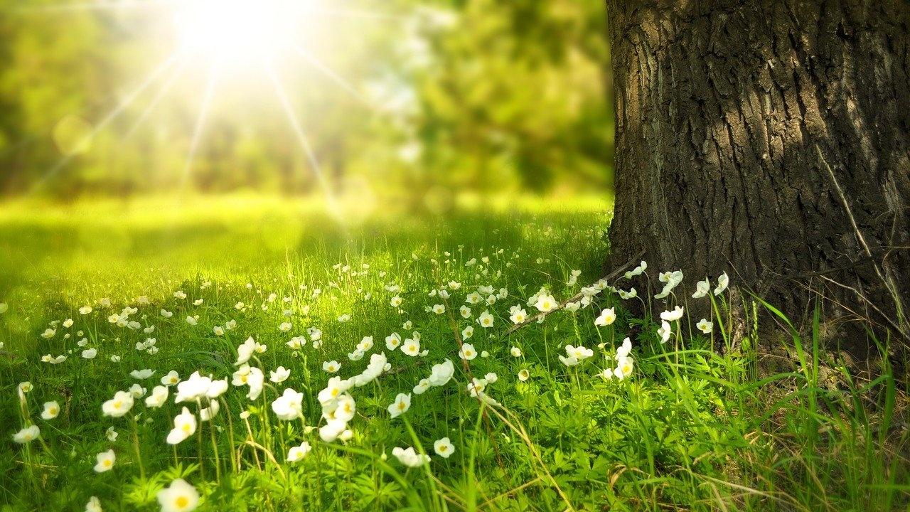 Горското стопанство в Омуртаг ще засади 577 дка нови гори
