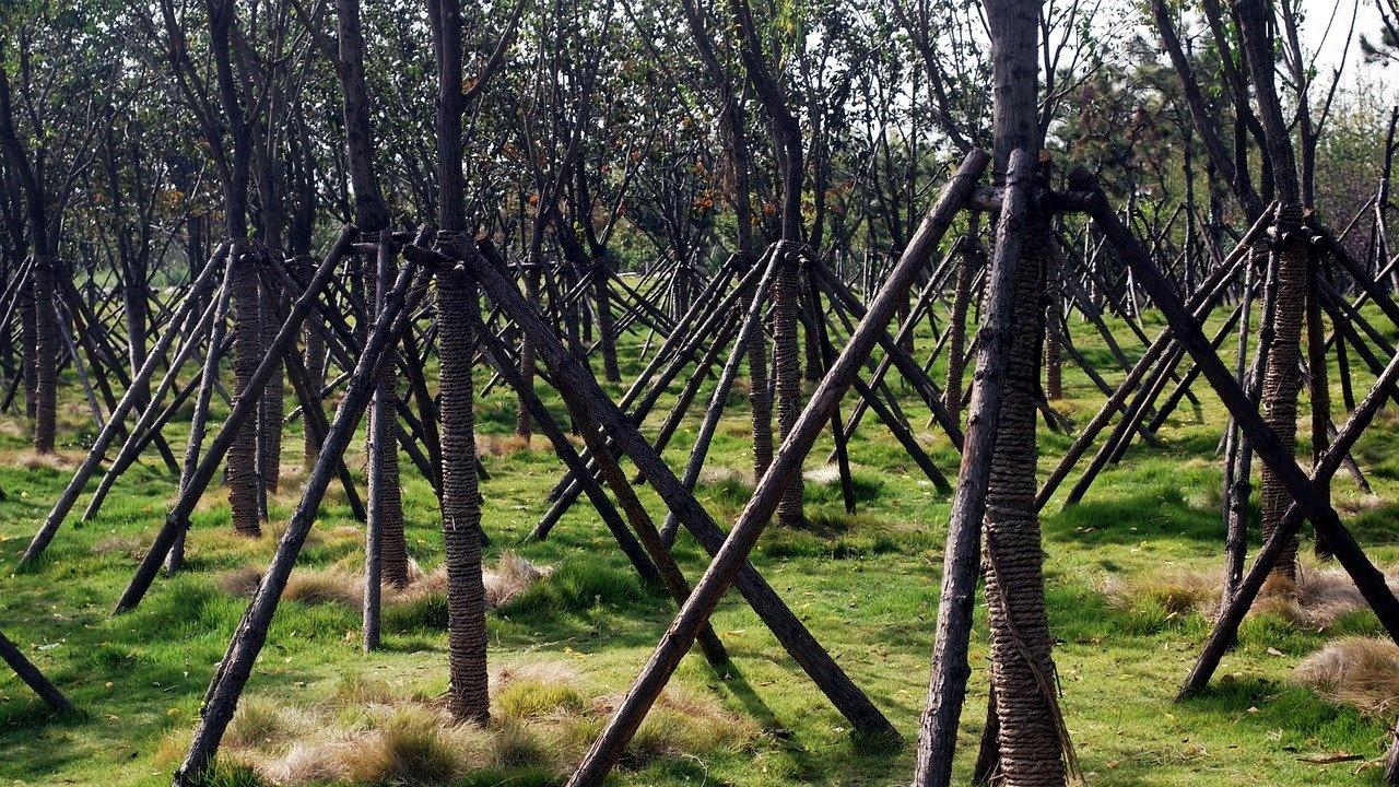 Община Берковица ще засади 230 дръвчета