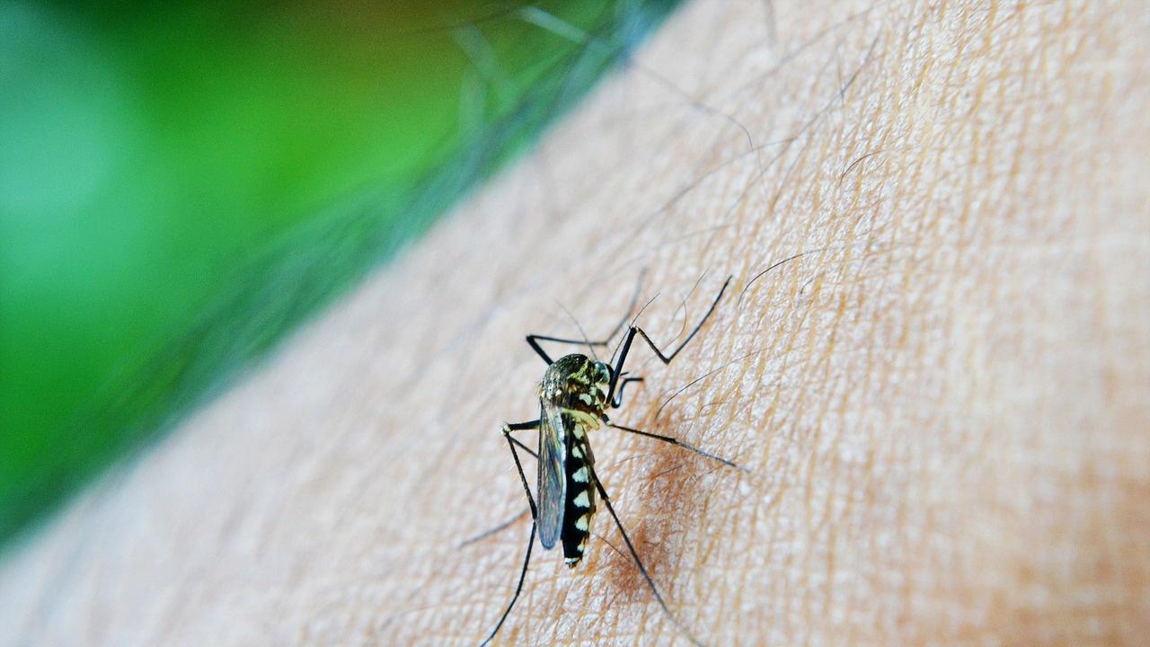 През 2020 г. 24 страни са изкоренили маларията