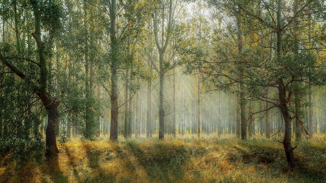 Общинари засадиха 150 нови дръвчета във Вършец