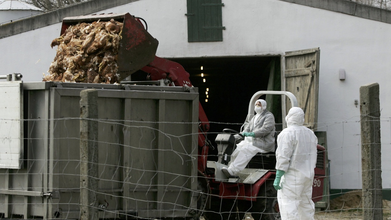 Птичи грип във ферма с 40 000 кокошки край Хасково