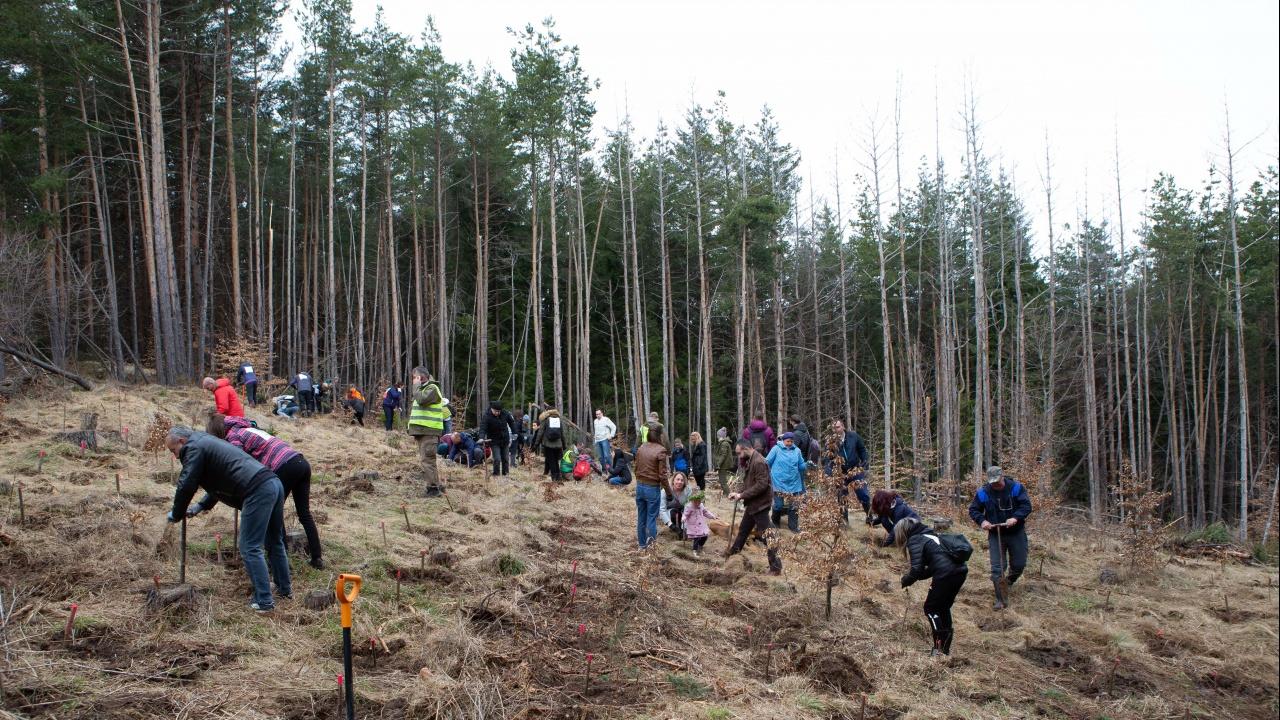 Румен Радев взе участие в засаждането на дръвчета в планината