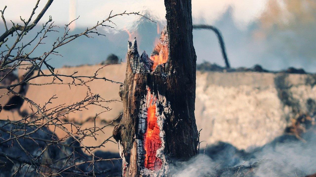 Огнеборци спасиха 280 дка гора от пожари в Шуменско